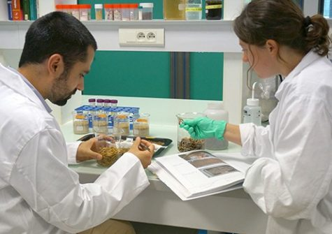 Ynsect, laboratory