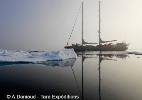 © A.Deniaud - Tara Expeditions