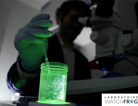 In the Watchfrog lab - Tétard Bioluminescence