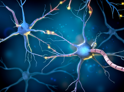 Neurons representation - Cells affected by CMT