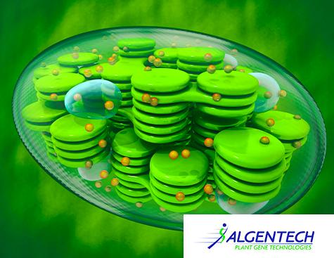 Chloroplast - HIGH-YIELD MOLECULAR FARMING OF INDUSTRIAL INGREDIENT - Algentech
